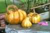 Cement Pumpkins, Concrete Garden Decor, DIY concrete pumpkins, Fall outdoor decor, Pumpkins Cinderella Set of Three Stone Pumpkins