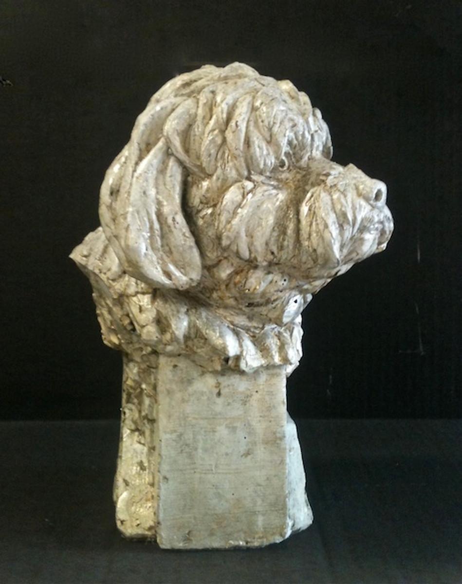 Shitzu Dog