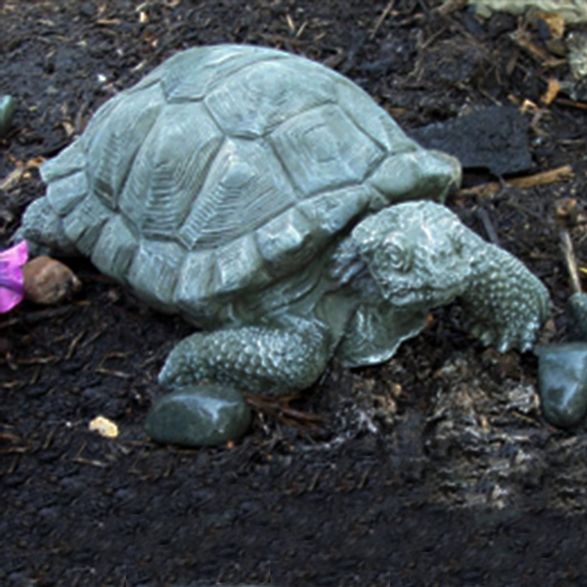 Large Tortoise