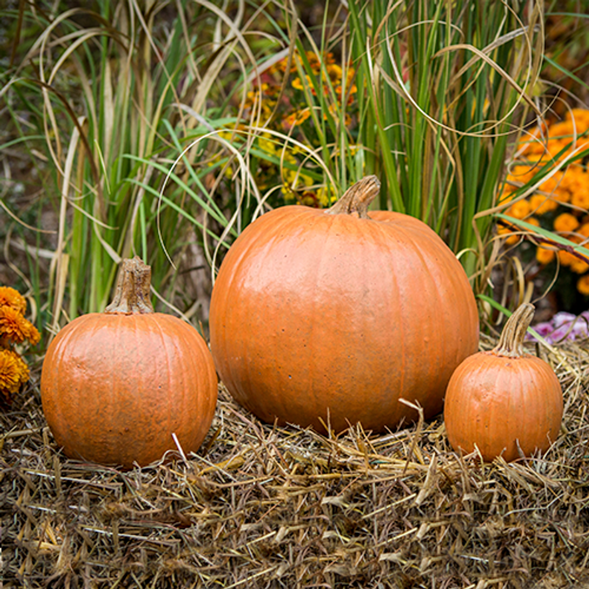 Cement Pumpkins, DIY concrete Pumpkins, Set of 3 Stone Pumpkins Stone Pumpkins Athena Garden, Cast stone garden pumpkins, outdoor concrete pumpkins, halloween outdoor decorations, Fall Pumpkin Decor
