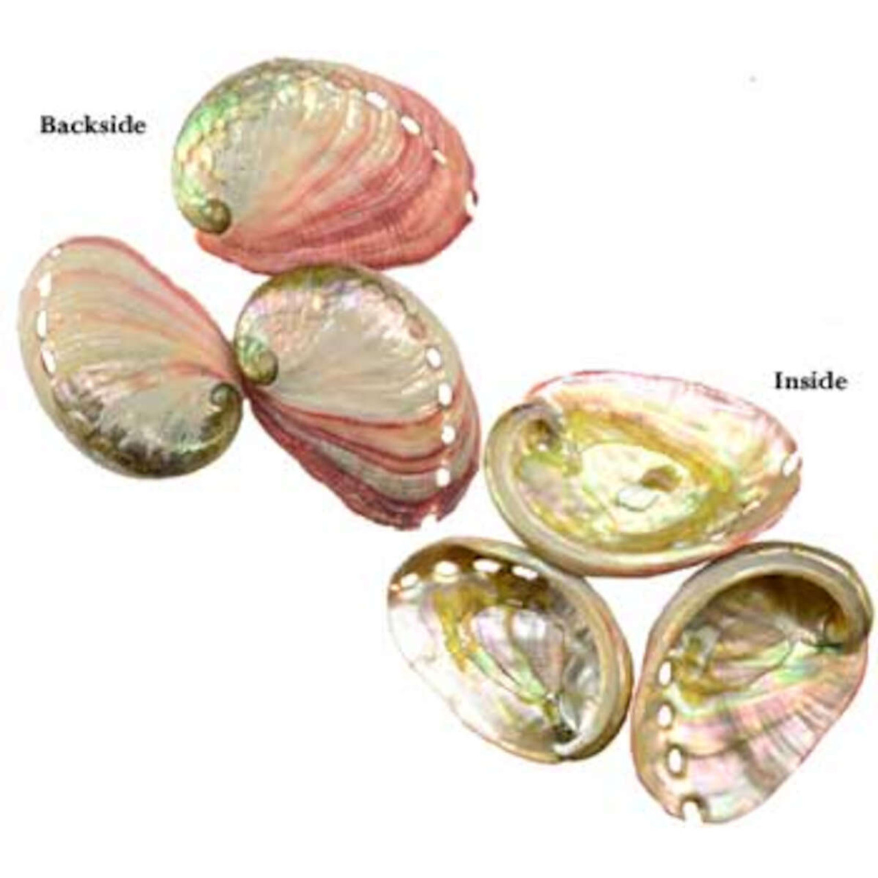 Abalone Shell Incense Burner 2 inches