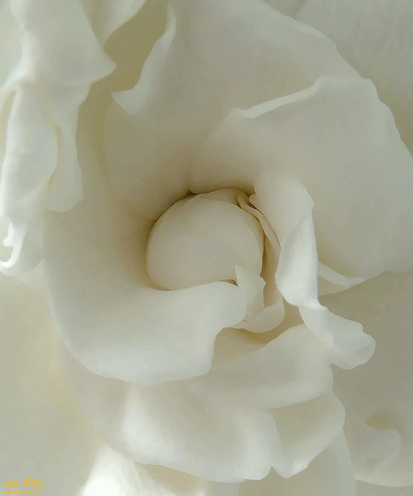 Creation in White