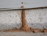 Returning to your winter home:  Check for termites