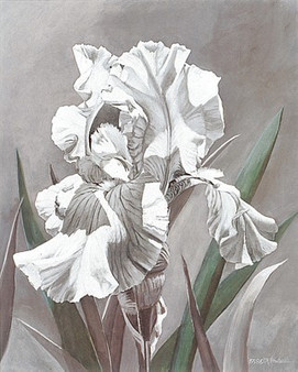 White Iris--M.Hornbuckle