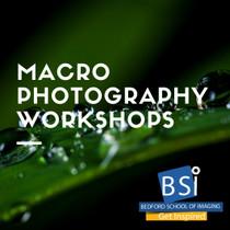 205. Macro Photography Workshops - Little Rock