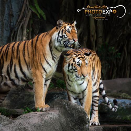 Memphis Zoo Excursion | Memphis Photo Expo