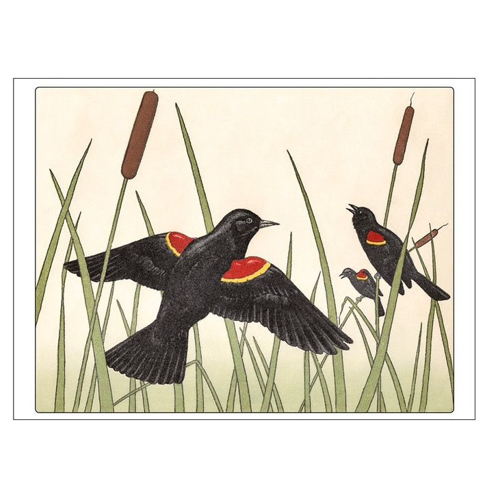 Red-Winged Blackbirds Small Boxed Notecards