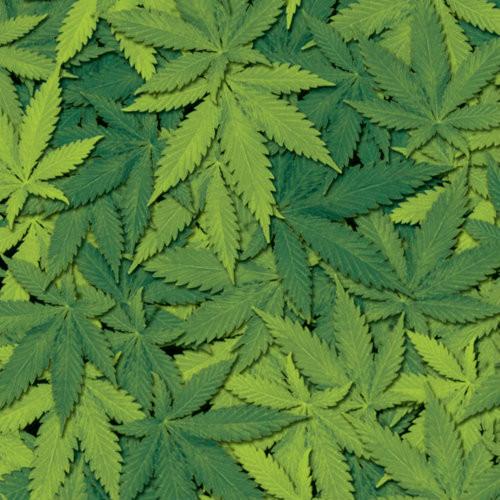 Got Weed? (50CM)