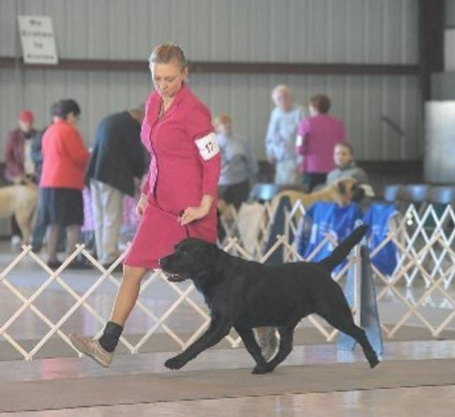 Conformation Class -6wks  (Sept 14 - Oct 19) 6:30pm-7:30pm-THIS CLASS IS FULL - Open to any purebred dog - Instructor: Piper M