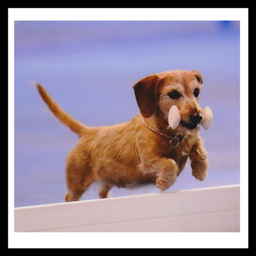 Open Obedience - 6wks (Sept 14 - Oct 19) - Tropical Park - Instructor: Deb R