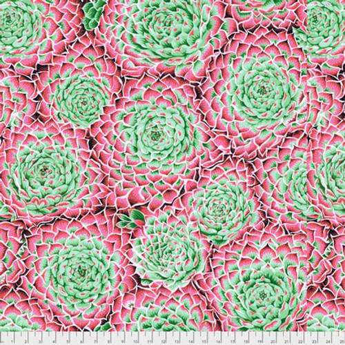 Succulent Pink