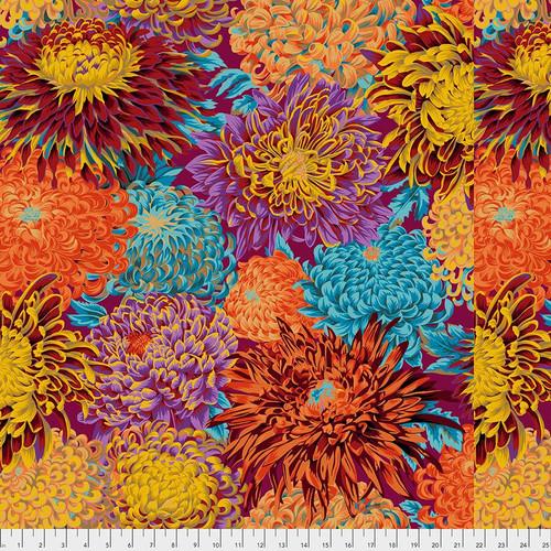 Japanese Chrysanthemum - Autumn Philip Jacobs