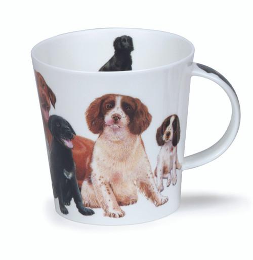 Cairngorm Dogs & Puppies Spaniel