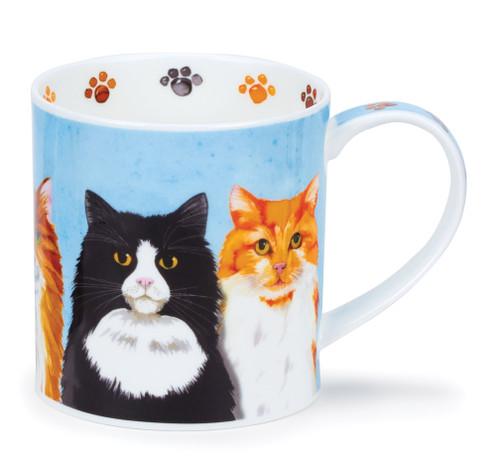 Orkney Furry Friends Cat