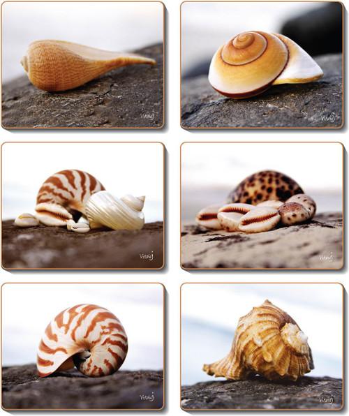 Seashells Placemats