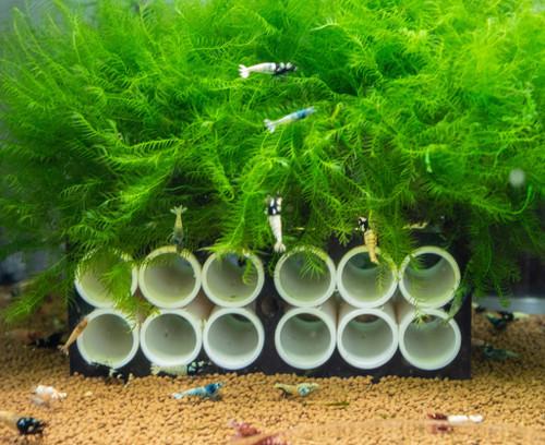 Large Shrimp Shelter