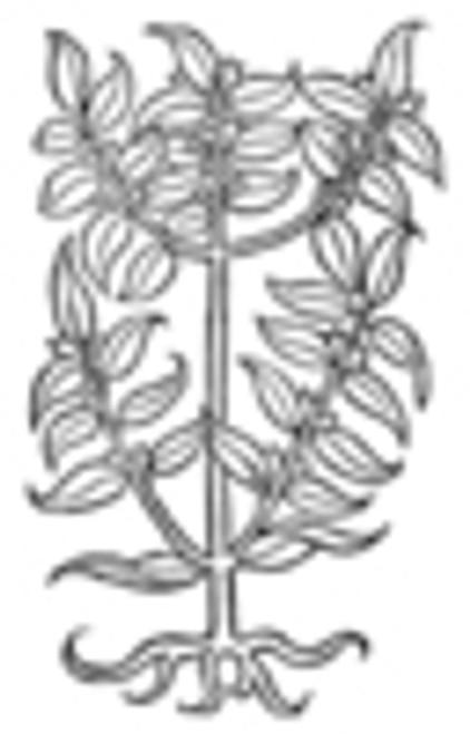 Bay Leaf Whole - Bulk - per oz