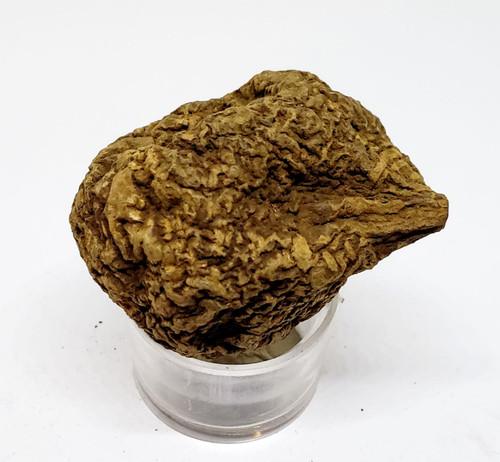 High John the Conqueror Root 23 gram root