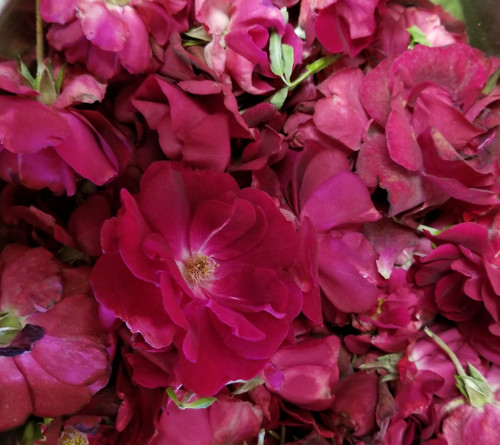 Red Rose Buds and Petals 4 oz