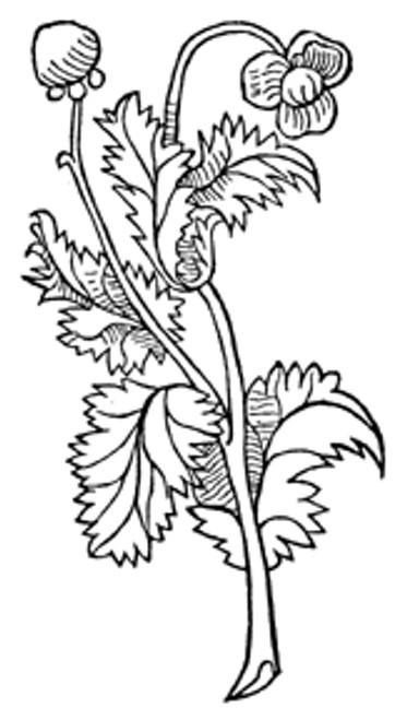 Poppy Seeds  1 oz