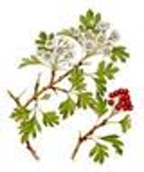 Hawthorn Flowers, Cut 1/2 oz