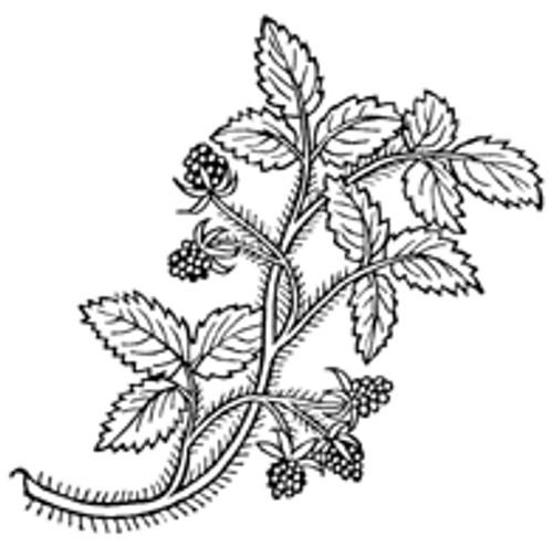 Blackberry Leaves, Cut  1/2 oz pkg