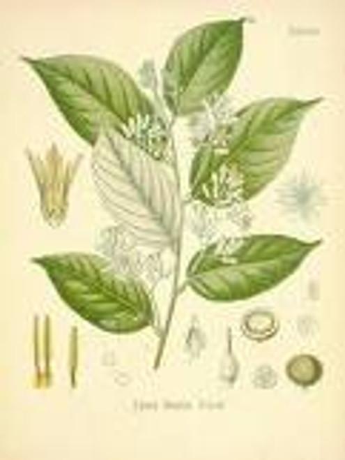 Benzoin Resin  Powder 1 oz