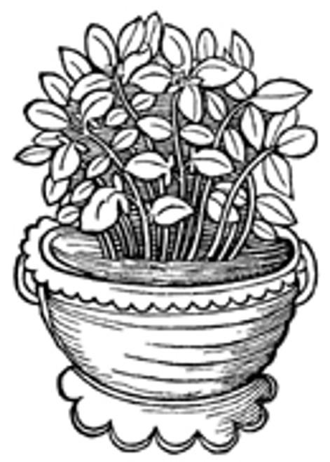 Basil Leaf, Cut - bulk - per oz