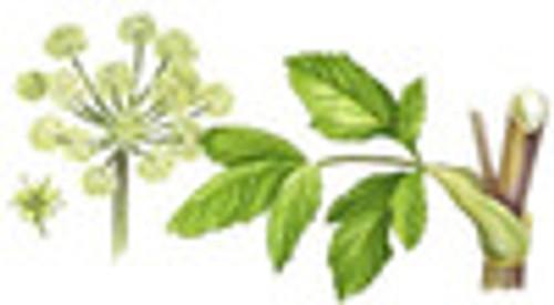 Angelica Root, cut -bulk-per oz