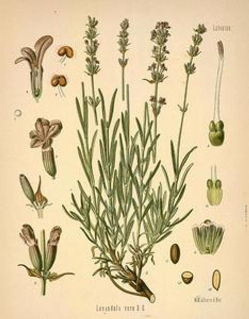 Lavender Essential Oil 2 dram