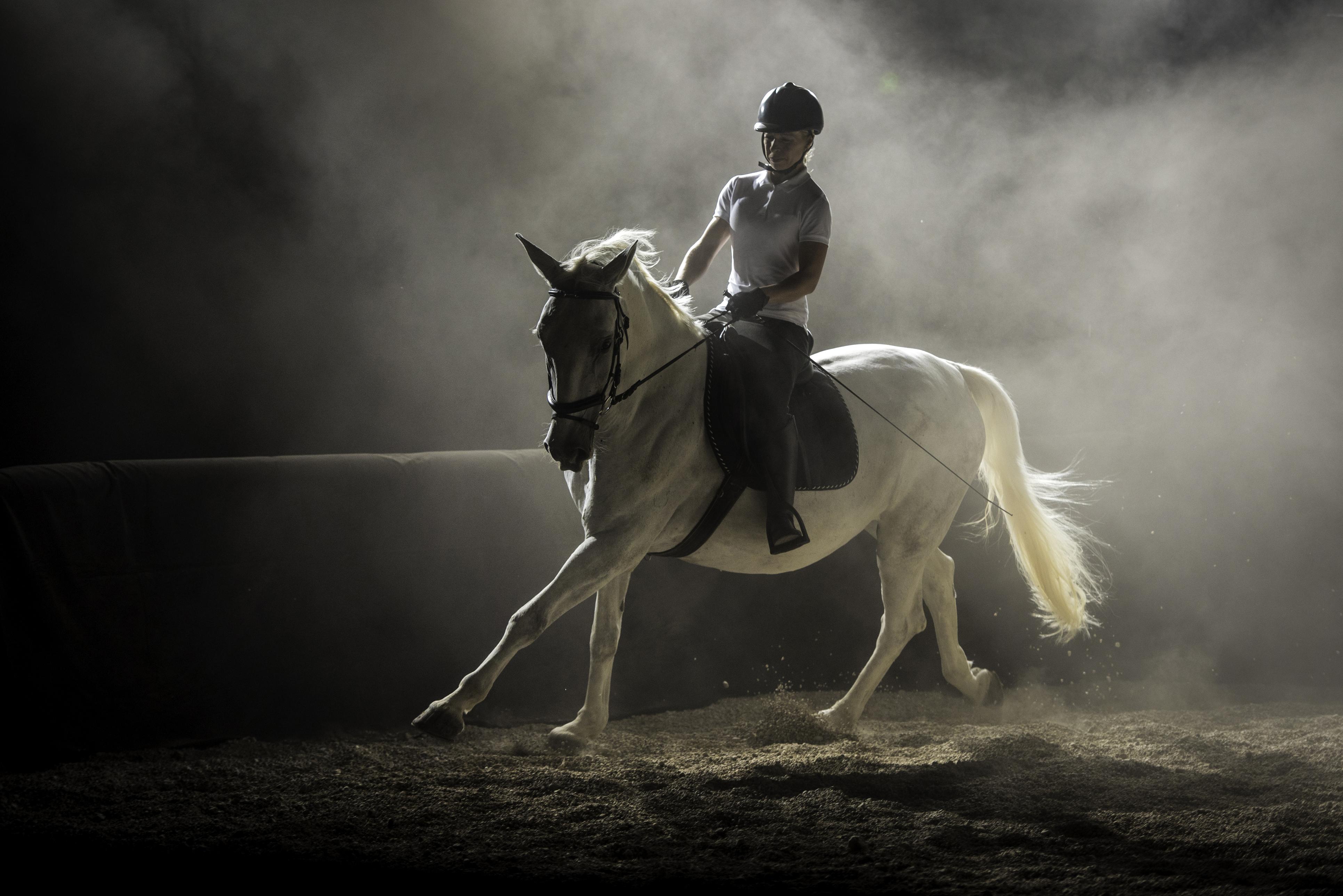 equine-istock-504829534.jpg