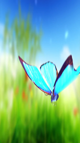 iPad Start Screen Video - Butterflies