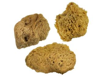 Natural Wool Sea Sponges