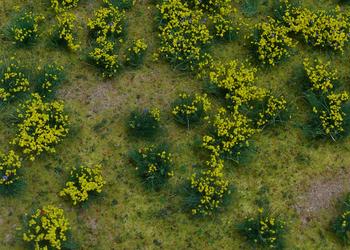 Flowering Yellow Meadow