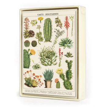 Notecards Succulents, Box of 8
