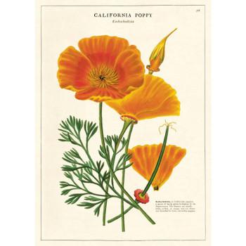 Cavallini Paper, California Poppy