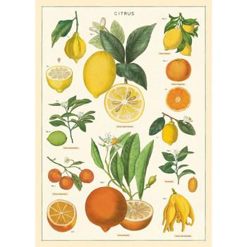 Cavallini Paper, Citrus 20x28