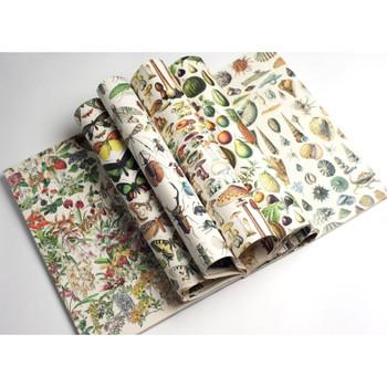 Creative Paper Book, Natural History