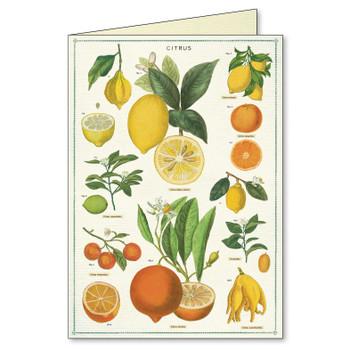 Notecards Jardin, Boxed Set
