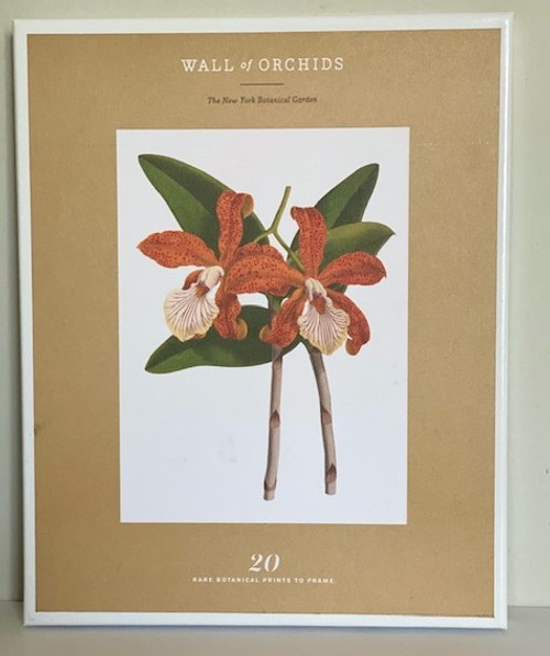 Wall of Orchids 20 Rare Botanical to Frame