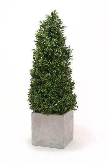 Boxwood Cone Topiary in Large Square Concrete Planter