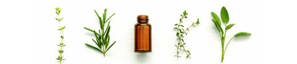 pp-category-page-banner-essential-oils-main-category-page.png