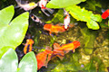 aquarium water tests