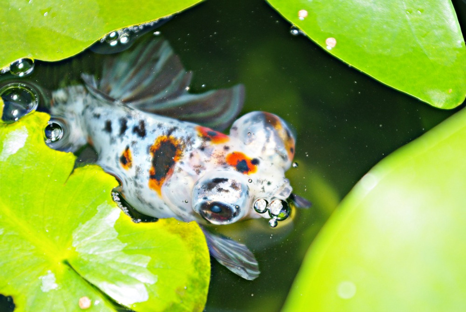 """Feeding fish while on Holiday """"Step by Step Expert Guide """""""