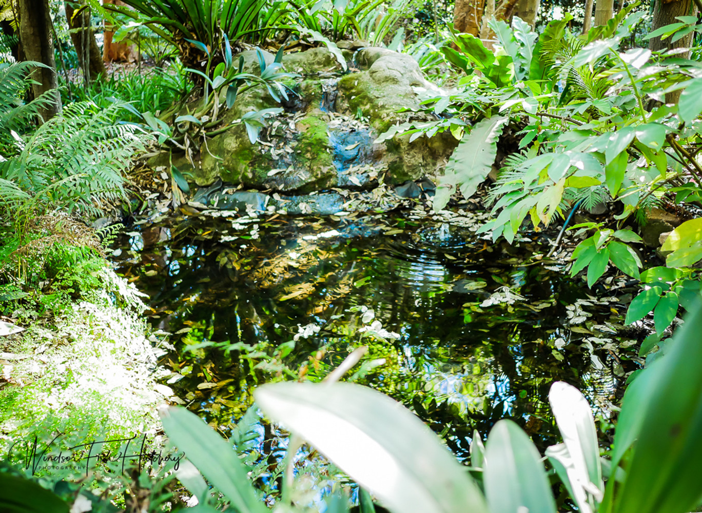 10 POND TIPS TO AVOID DISASTER YOU SHOULD DO NOW!!!