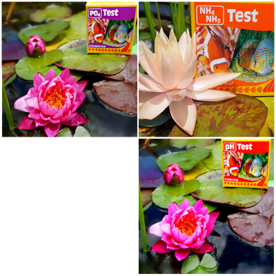 Buy two test kits and get a third free for your pond or aquarium