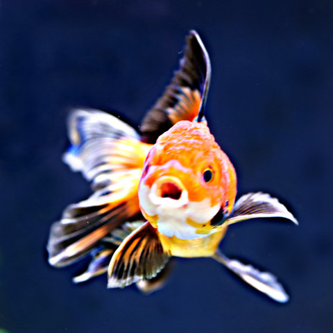"""What happens next when i order from Windsor Fish Hatchery? """" Easy Read"""""""