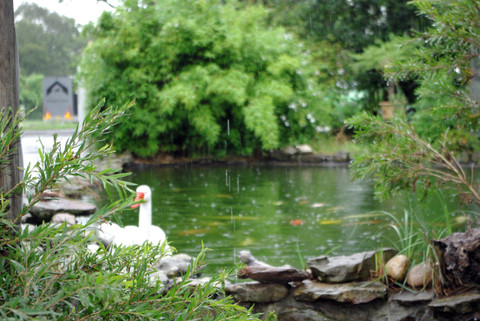 Prepare your pond & fish now for Winter! The Why & How Made Easy