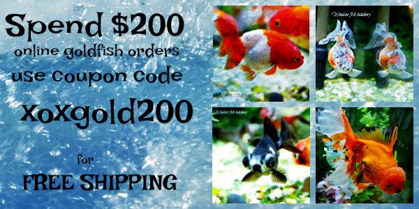 goldfish-free-shipping-banner.png