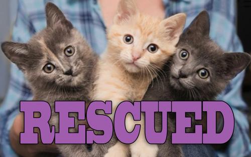 rescue-sm.jpg